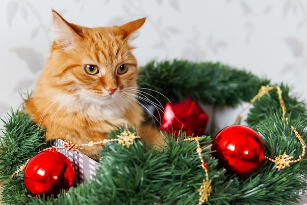 Ginger cat lies in box with christmas decorations. fluffy pet is doing to sleep there.