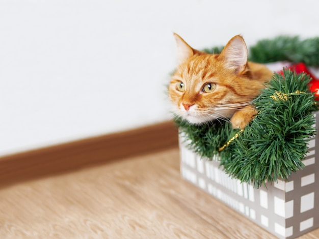 Ginger cat lies in box with christmas and  decorations. fluffy pet is doing to sleep there.