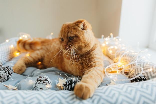 Рыжий кот лежит на своей кровати, украшенной новогодними огнями. новый год и рождество концепция.