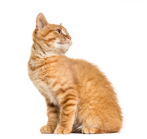 생강 고양이 박 찾고 찾고, 흰색 절연