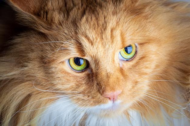 真剣に見ている生inger猫
