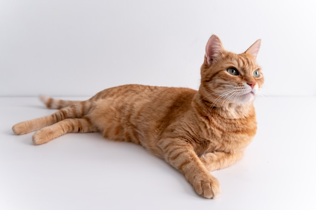 Ginger cat lying on white table and looking away thoughtfully