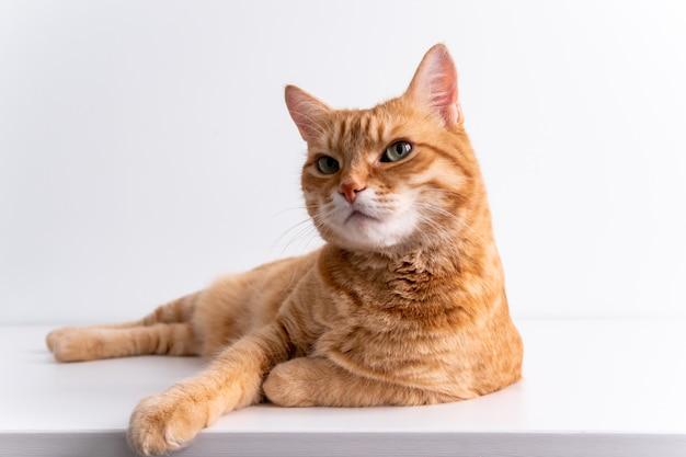 Ginger cat lying on white table