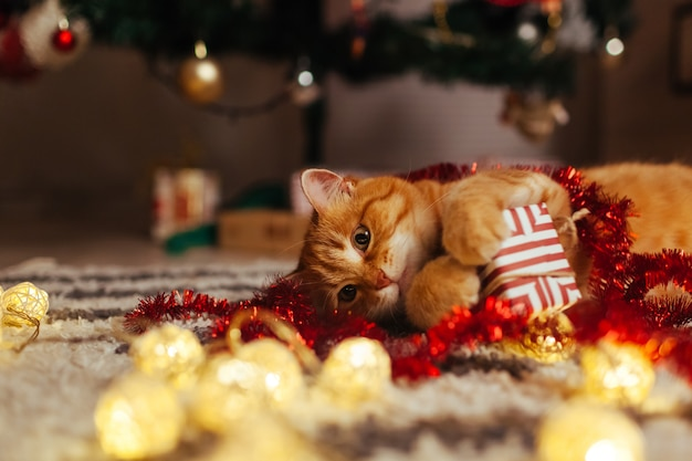 Ginger cat playing with garland and gift box under christmas tree