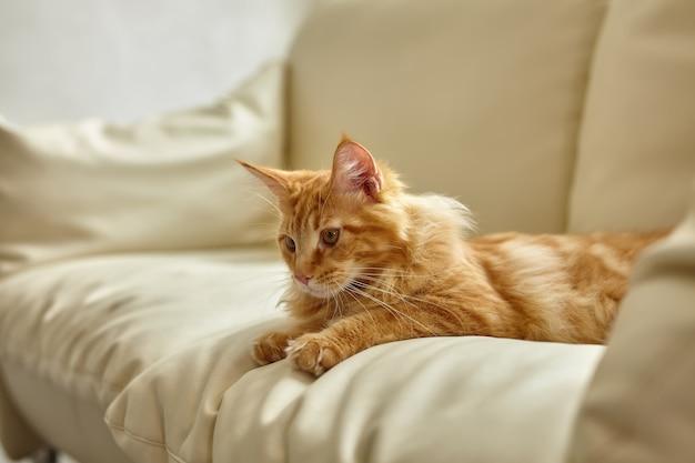 横になっているリビングルームのソファでリラックスした生姜猫