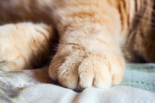 Ginger cat's paw on the blanket