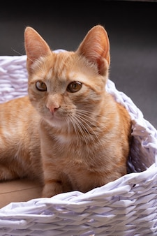 A ginger cat sitting in cozy basket