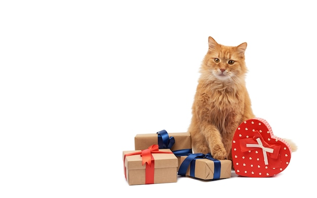 Ginger cat sitting in the middle of wrapped boxes Premium Photo