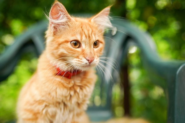 緑の草の自然の背景に座っている生姜猫