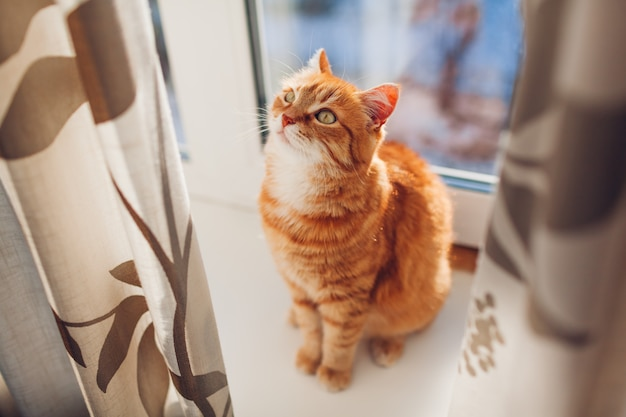 Ginger cat sitting on window sill at home in the morning. pet enjoying sun.