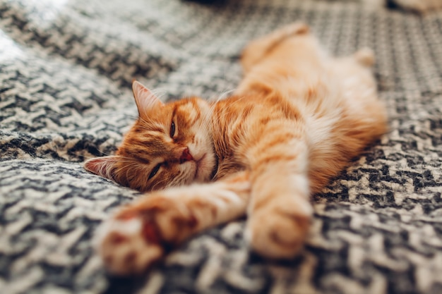 Ginger cat sleeping on couch in living room lying on blanket