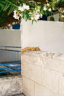 Рыжий кот спит на каменном заборе возле дома