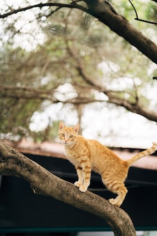 Ginger cat standing on a tree.