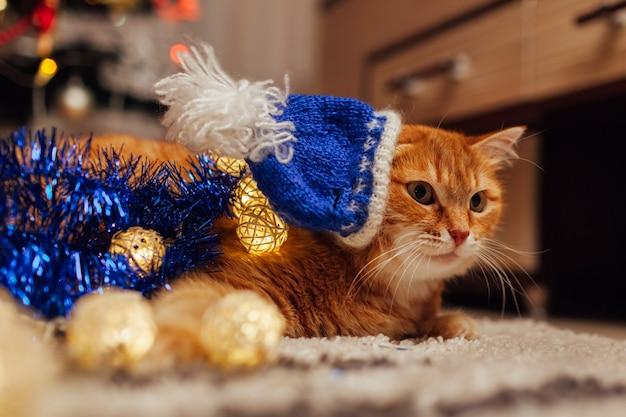 Рыжий кот в синей шляпе деды морозы под елкой играет с огнями и мишурой дома новый год