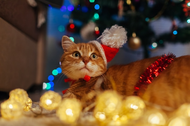 Ginger cat wears santa's hat under christmas tree playing with lights