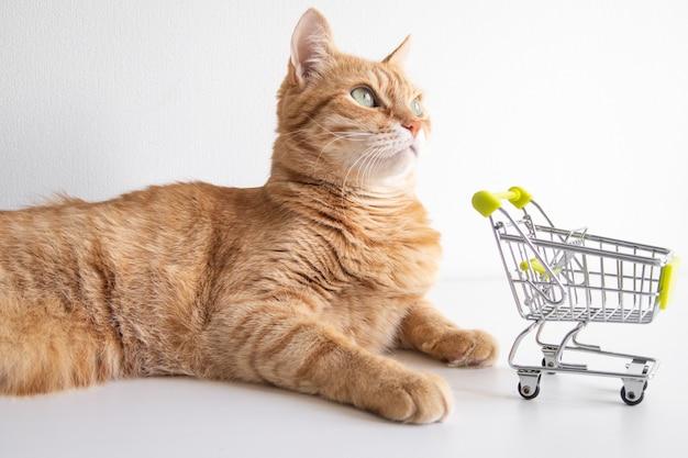 흰색 배경에 쇼핑 카트가 있는 생강 고양이가 흥미롭게 보고 있습니다. 동물 가게에서 식료품을 사러 가기로 결정한 귀여운 애완 동물. 작은 미니어처 상점 트롤리. copyspace 배너