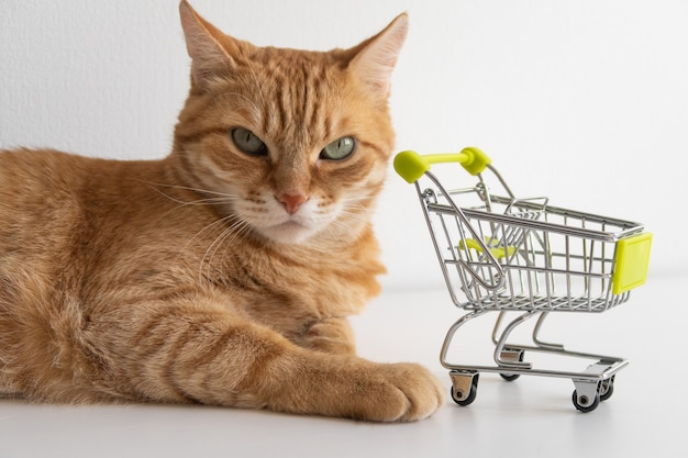 Ginger cat with shopping cart