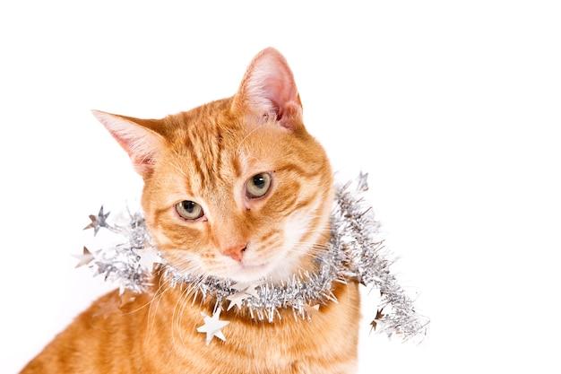 白に対して銀のクリスマスの花輪を持つ生姜猫
