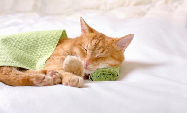 Рыжая домашняя кошка спит, положив голову на зеленое полотенце