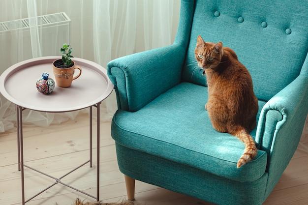 青い肘掛け椅子に座っている生姜飼い猫