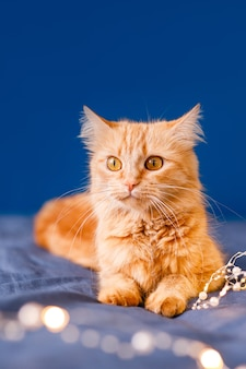 A ginger fluffy cat sits on the bed and washes on a blue background with a christmas garland.