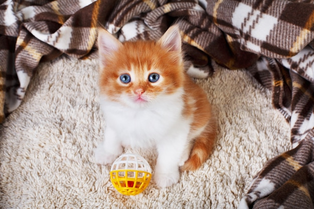 Ginger kitten on a blanket with toy