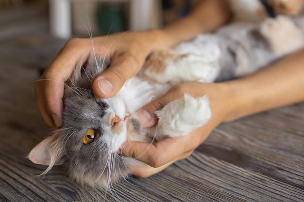 男の手に横たわっている生姜子猫