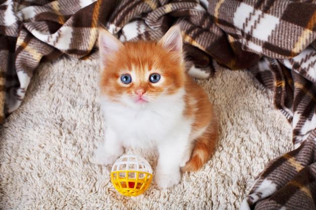 Рыжий котенок на одеяле с игрушкой
