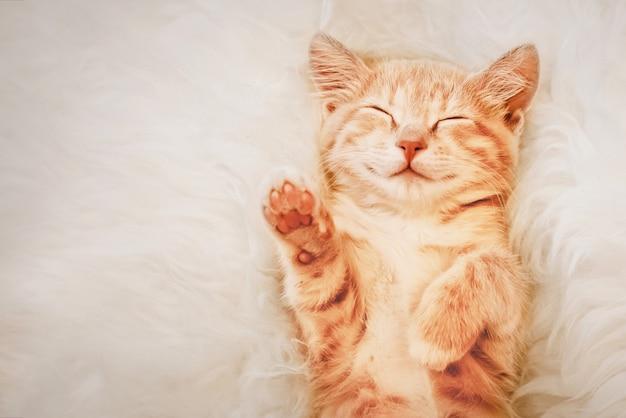 生姜の子猫は夢の中で前足を上げた。選択と投票の概念。