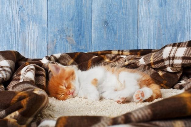 生姜の子猫が毛布で眠る