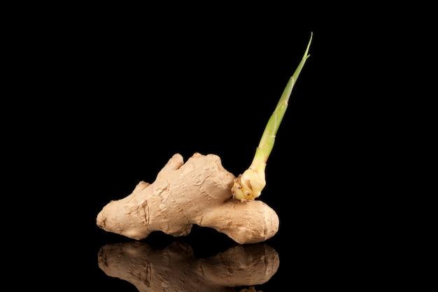 У корня имбиря появился новый росток