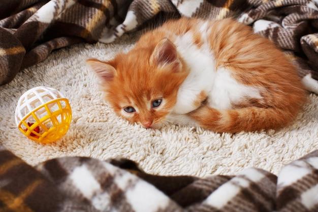 Ginger sleepy sad kitten at blanket