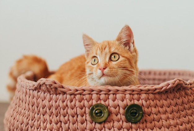Ginger tabby kitten in a knitted pink cat bed.
