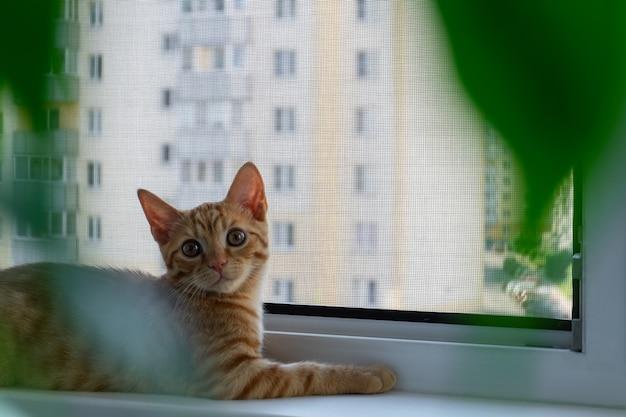 Рыжий полосатый котенок лежит на подоконнике
