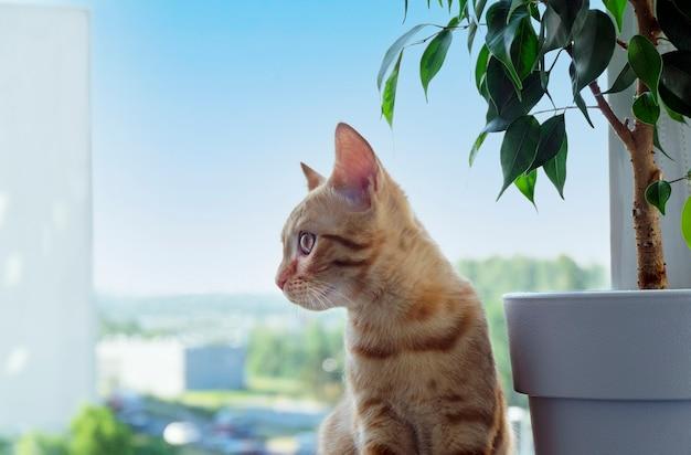 Рыжий полосатый котенок сидит на подоконнике и смотрит в сторону