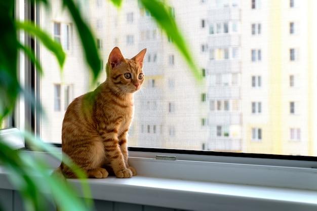 Рыжий полосатый котенок сидит на подоконнике