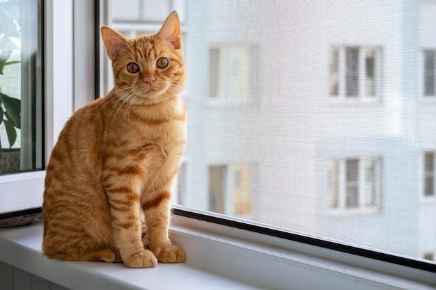 Рыжий полосатый котенок сидит на подоконнике с москитной сеткой