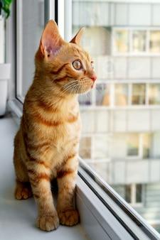 Рыжий полосатый котенок сидит на подоконнике и смотрит