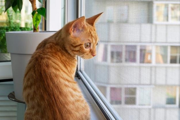Рыжий полосатый котенок сидит на подоконнике и смотрит Premium Фотографии