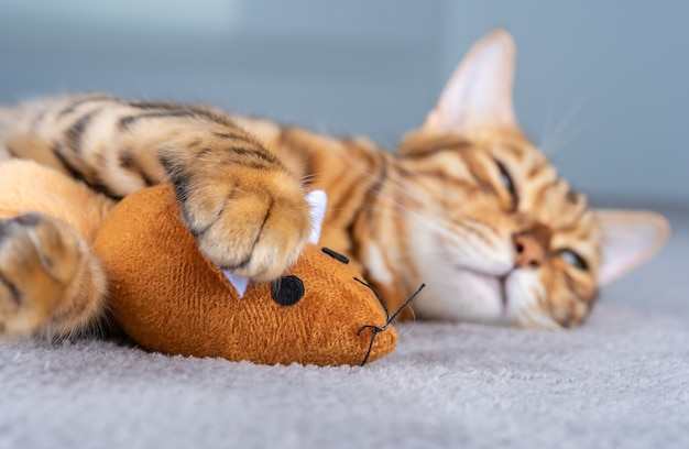 Ginger toy mouse in the paws of a sleeping bengal cat. selective focus in the foreground.
