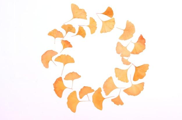 Ginkgo biloba leaves round herbarium on white background
