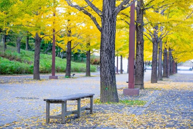Ginkgo road в спортивном парке bandai azuma, фукусима, япония