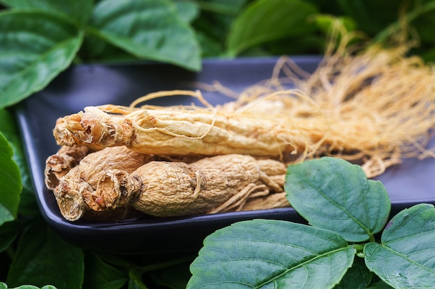 Ginseng root on the black plate with green nature .