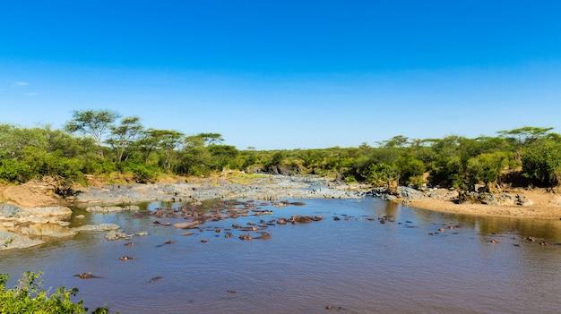 Бассейн гиппо в саванне серенгети, танзания.