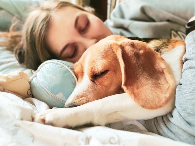 Girl and beagle dog sleep together. girl hugs a dog. home pet.