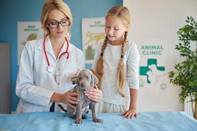 Ragazza che pulisce il suo cucciolo dal veterinario