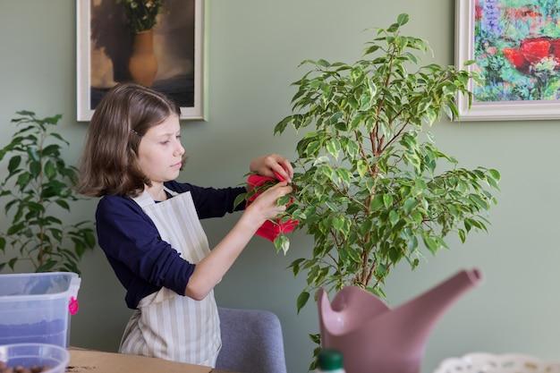 観葉植物の世話をしている女の子、子供はイチジクの葉からほこりを拭き取ります。ケア、趣味、観葉植物、鉢植えの友達、子供のコンセプト