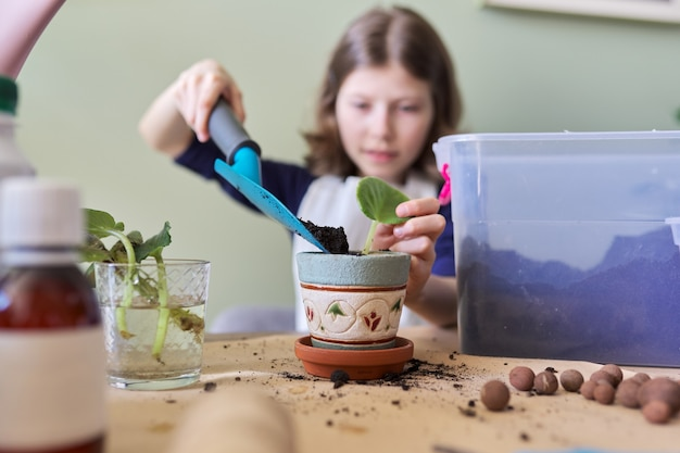 Girl child plants leaf of saintpaulia young plant in pot. uses spatula, watering can, ground. new plant in house, care, hobby, houseplant, potted friends, children concept