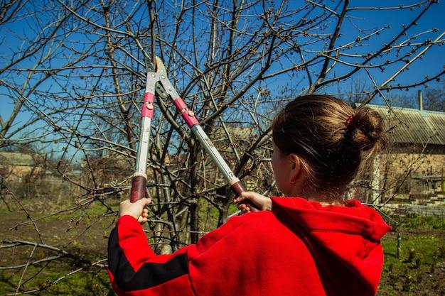 소녀는 봄 정원에서 가지 치기 가위로 과일 나무에 가지를 자릅니다.