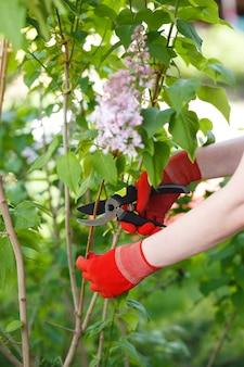Девушка срезает или подстригает куст секатором в саду.